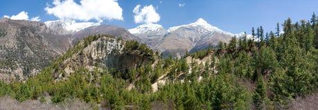 Foresta di conifere nel Nepal Fotografia Stock