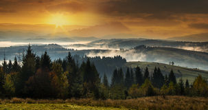 Foresta di conifere nelle alte montagne al tramonto con una f densa Immagini Stock Libere da Diritti