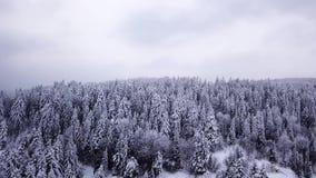 Foresta di conifere Siluetta dell'uomo Cowering di affari stock footage