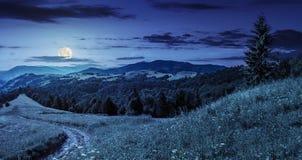 Foresta di conifere su una cima della montagna alla notte immagini stock