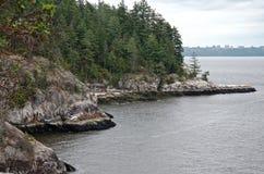 Foresta di conifere sulle scogliere costiere in tempo piovoso, fotografia stock