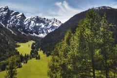 Foresta di conifere verde e alte montagne nevose Fotografia Stock Libera da Diritti