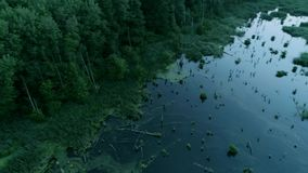 Foresta di conservazione della natura che inonda acqua verde stock footage