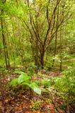 Foresta di Costa Rica Fotografie Stock