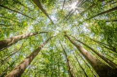 Foresta di Cypress e palude del parco nazionale di Congaree in Caro del sud immagine stock libera da diritti