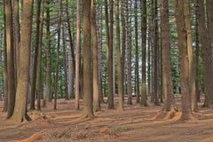 Foresta di Dorwin Fotografie Stock Libere da Diritti