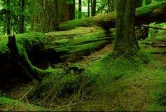 Foresta di Emeral Immagine Stock
