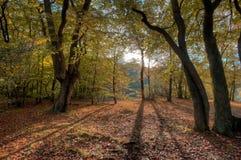 Foresta di Epping Fotografia Stock