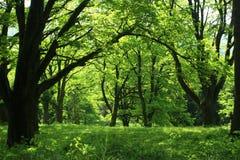 Foresta di estate Fotografie Stock Libere da Diritti