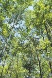 Foresta di estate immagini stock