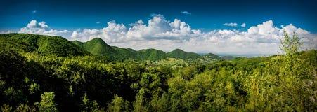 Foresta di estate del cielo degli alberi del paesaggio Fotografia Stock Libera da Diritti
