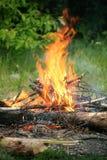 Foresta di estate del fuoco del fuoco di accampamento del falò Fotografia Stock Libera da Diritti