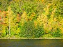 Foresta di estate sulla sponda del fiume fotografie stock