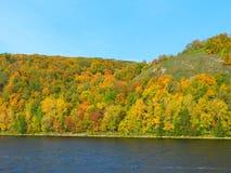 Foresta di estate sulla sponda del fiume Fotografia Stock Libera da Diritti