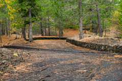 Foresta di Etna Immagine Stock Libera da Diritti