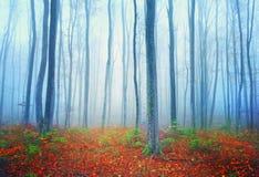 Foresta di favola di autunno Fotografia Stock Libera da Diritti