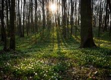 Foresta di fioritura Fotografie Stock
