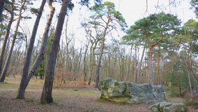 Foresta di Fontainebleau stock footage