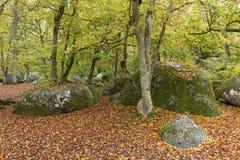 Foresta di Fontainebleau Fotografia Stock