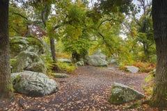 Foresta di Fontainebleau Immagini Stock