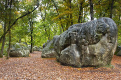 Foresta di Fontainebleau Fotografie Stock