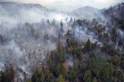 Foresta di fumo Fotografia Stock