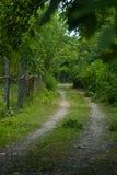 Foresta di Gabala l'azerbaijan fotografie stock libere da diritti