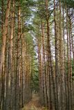 foresta di giorno fotografia stock libera da diritti