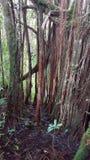 Foresta di Hawaian Immagini Stock Libere da Diritti