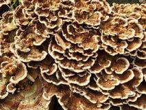 Foresta di ina del fungo di sostegno Fotografie Stock