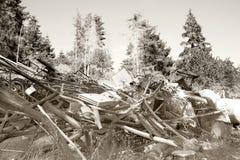 Foresta di inquinamento dello scarto del ferro Fotografie Stock