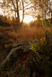 Foresta di inseguimento di Cannock Fotografie Stock Libere da Diritti