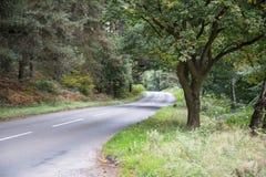 Foresta di inseguimento di Cannock Fotografia Stock Libera da Diritti