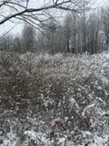 Foresta di inverni Fotografia Stock Libera da Diritti