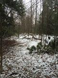 Foresta di inverni Immagini Stock