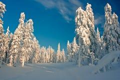 Foresta di inverno Fotografie Stock