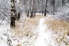 Foresta di inverno Immagini Stock