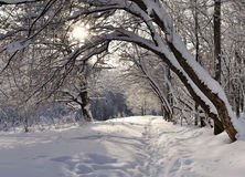 Foresta di inverno. Immagine Stock