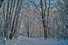 Foresta di inverno. Fotografie Stock Libere da Diritti