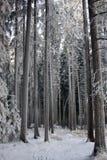 Foresta di inverno Fotografia Stock