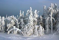 Foresta di inverno al sole Immagine Stock