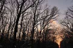 Foresta di inverno al tramonto Fotografie Stock Libere da Diritti