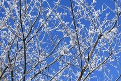 Foresta di inverno, alberi coperti da neve, rami di Snowy Fotografie Stock