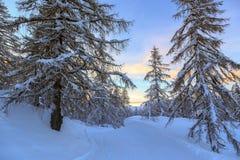 Foresta di inverno in alpi vicino al centro del cielo di Vogel in Slovenia Immagine Stock