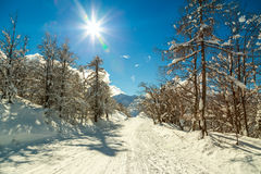 Foresta di inverno in alpi vicino al centro del cielo di Vogel in Slovenia Fotografia Stock Libera da Diritti