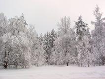 Foresta di inverno. Campo di neve Immagini Stock Libere da Diritti