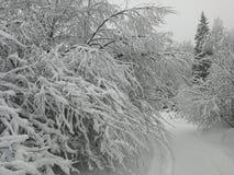 Foresta di inverno con forte nevicata Immagine Stock