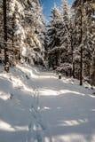 Foresta di inverno con la traccia di escursione innevata e chiaro cielo in montagne di Beskids in Polonia Fotografia Stock Libera da Diritti