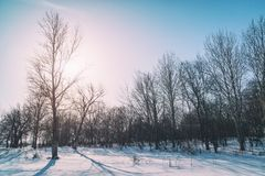 Foresta di inverno contro il cielo blu Fotografia Stock Libera da Diritti