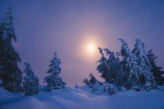 Foresta di inverno coperta da neve alla notte di luce della luna Immagini Stock Libere da Diritti
